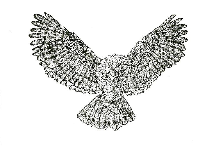 amazon com great grey owl flying original decorative art print