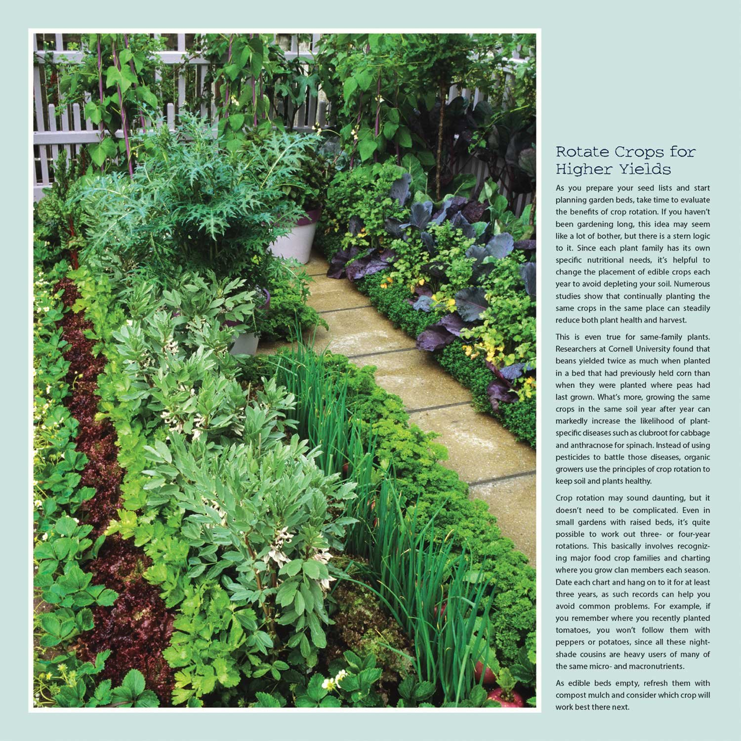 The Organic Kitchen Garden 2018 Wall Calendar: Recipes and Tips by Ann  Lovejoy: Ann Lovejoy, Amber Lotus Publishing: 0762109029275: Amazon.com:  Books