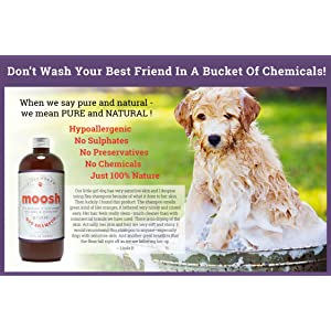 4. Fieldworks Natural Dog Shampoo