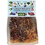 C & C 1500 Live Ladybugs for Garden - Bag of Live Ladybugs - Ladybugs for Sale - 1500 Ladybugs - Guaranteed Live Delivery