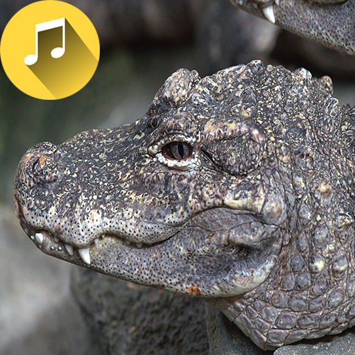 Alligator Sounds Ringtones