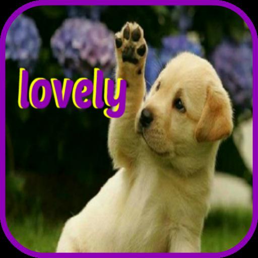 lovely puppies Beagle Springer Spaniel