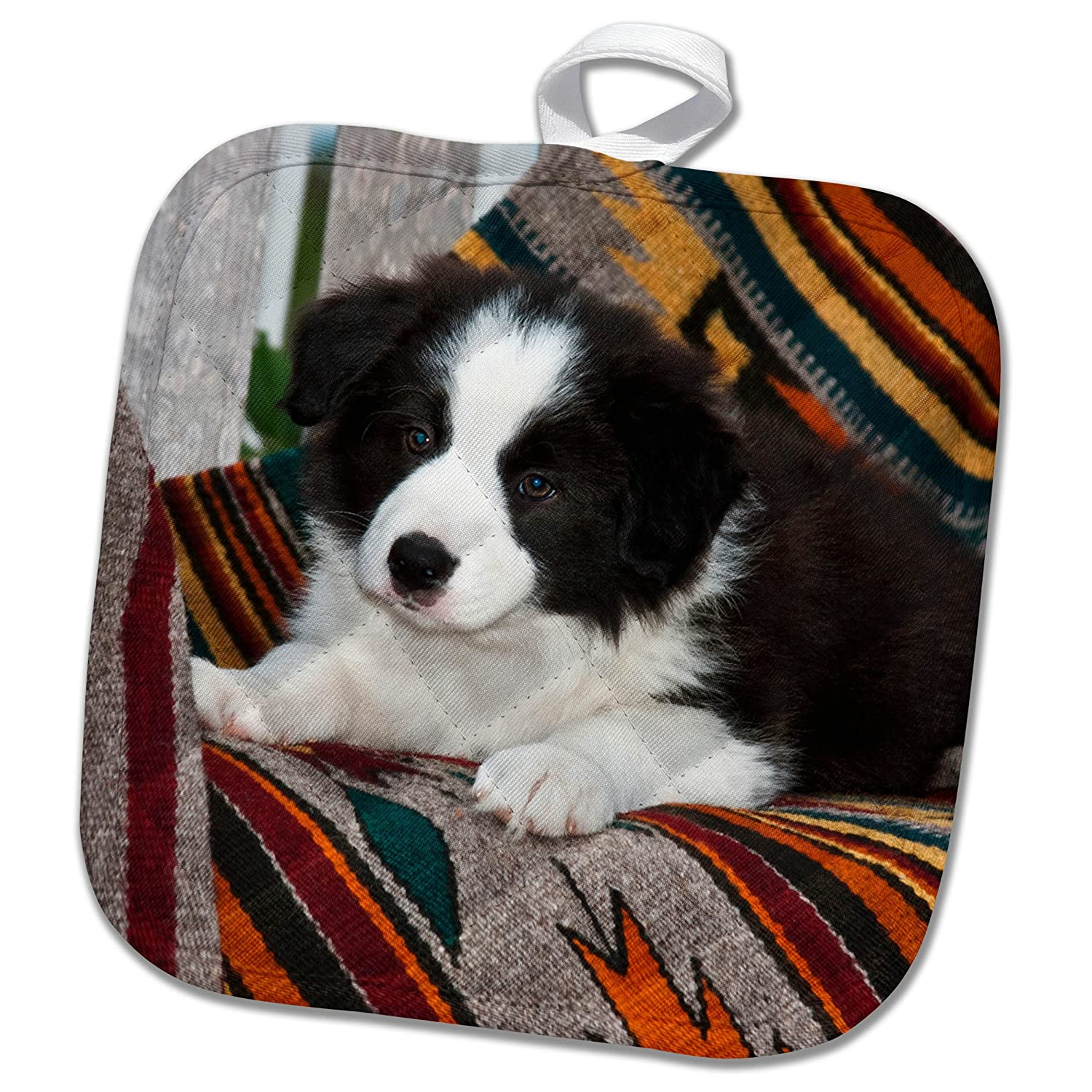 3drose Phl 258176 1 Pot Holder Border Collie Puppy Lying On Blankets 8 By 8