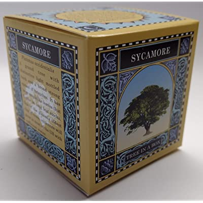 Tree In A Box - Sycamore : Garden & Outdoor