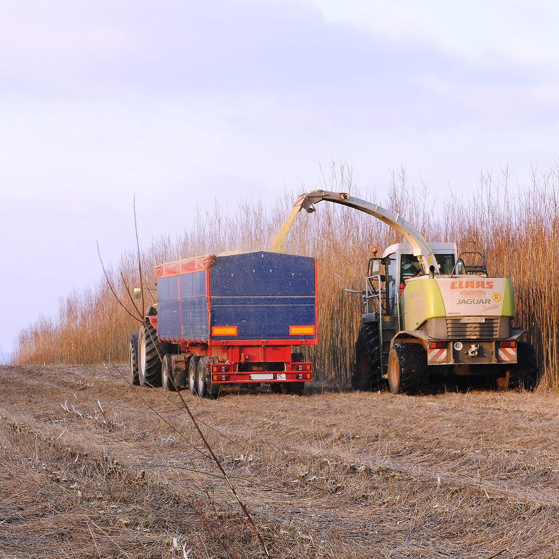 Berühmt Energieholz-Weidensteckling für Weidenhäuser bzw. Energiewald- und &WS_83
