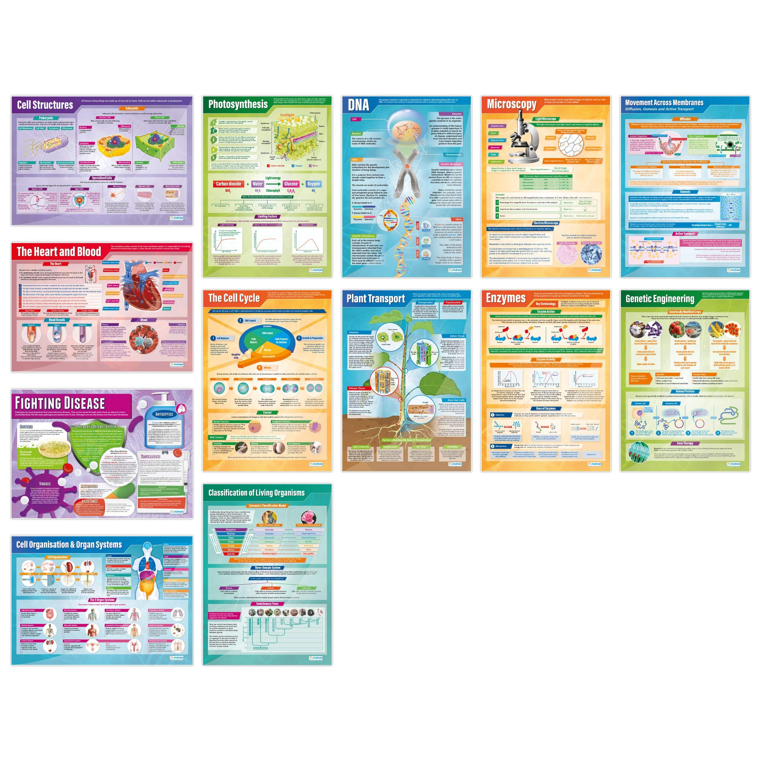 Biology Posters - Set of 13 | Science Posters | Laminated Gloss Paper Measuring 33'' x 23.5'' | STEM Charts for The Classroom | Education Charts by Daydream Education