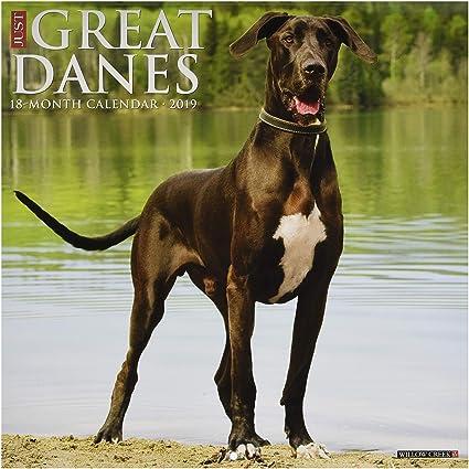 Just Great Danes 2019 Wall Calendar (Dog Breed Calendar)