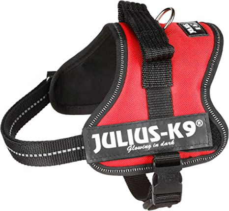 Julius-K9 Mini-Mini, 40-53 cm, Rojo: Amazon.es: Productos para ...