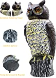 Scarecrow Owl Decoy with Rotating Head & Anti-Bird Noise, Mounting Bracket Included, Horned Fake Owl Bird Control Repellent Deterrent, By Fedmax.
