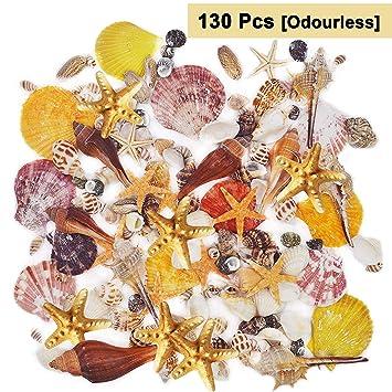 Belle Vous 130 Deko Muscheln Haus Dekoration Echte Seesterne Muscheln Zum Basteln Und Meeresschnecken Für Kerzenherstellung Strand Motto Party