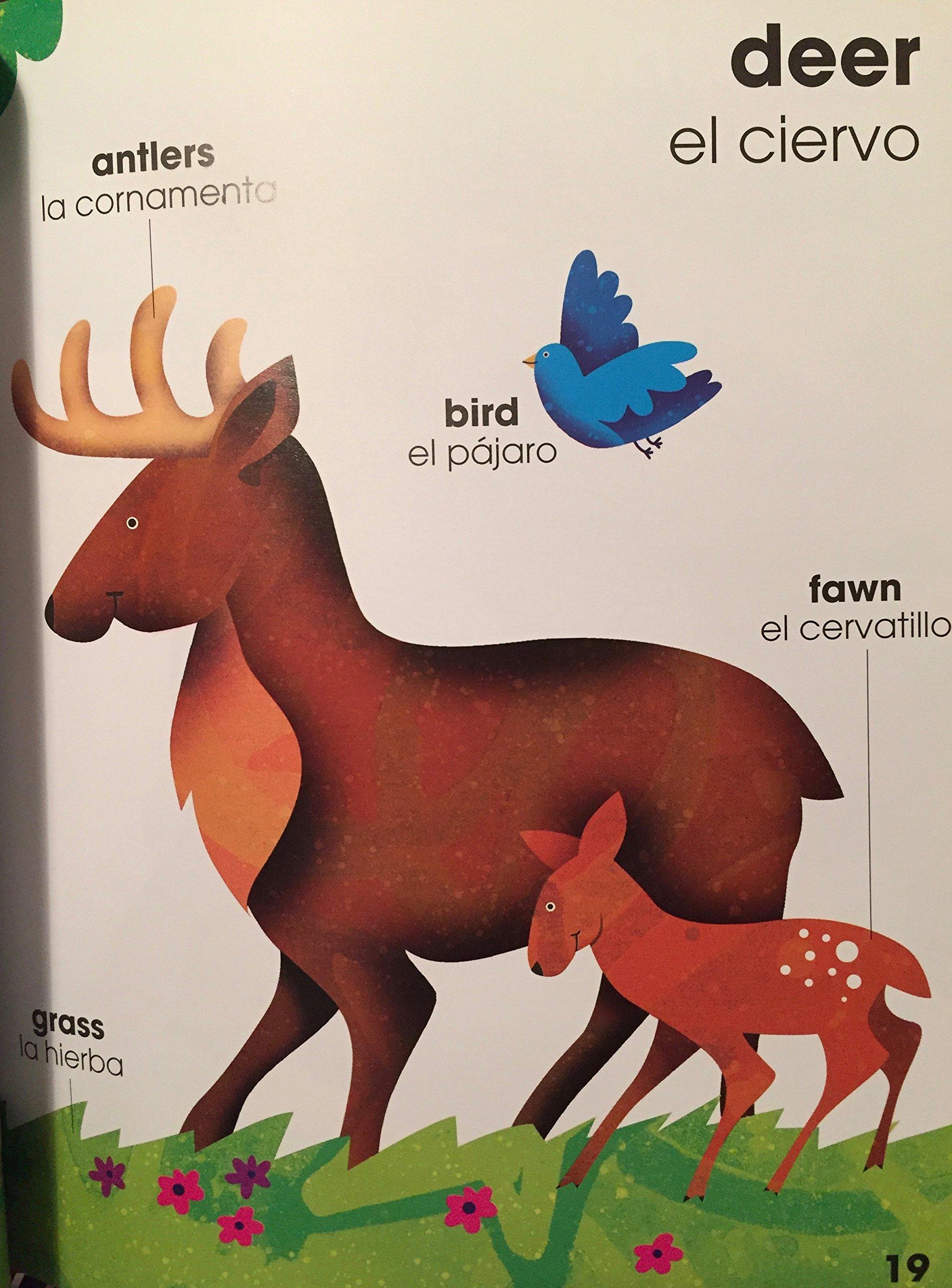 WordBooks / Libros de Palabras English / Spanish SET: