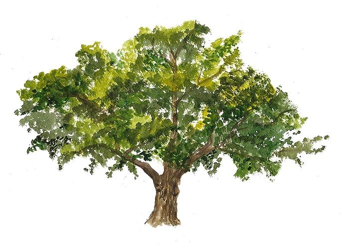 Amazon.com: Oak tree art #A032. (8x10) Oak tree painting.Oak tree ...