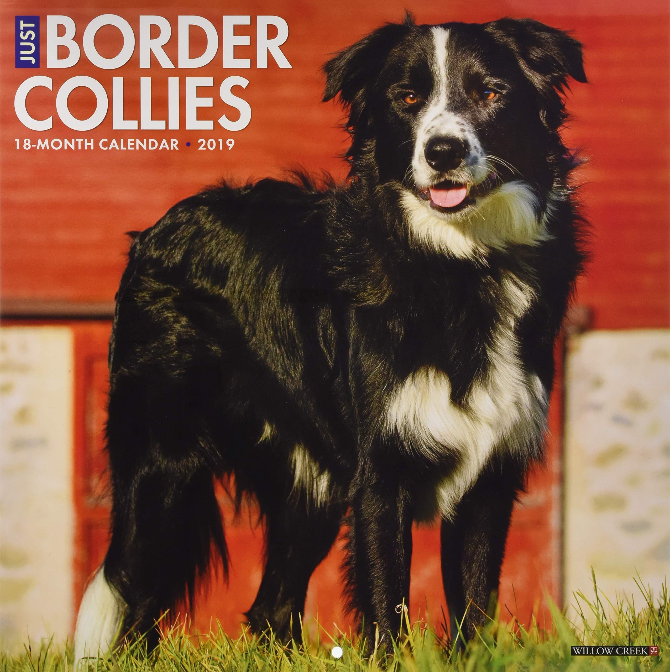 Read Online Just Border Collies 2019 Wall Calendar (Dog Breed Calendar) PDF