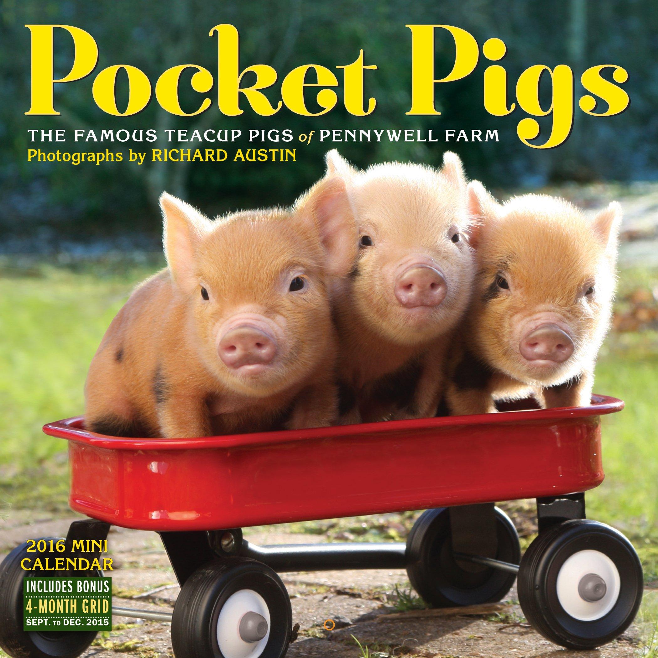 Pocket pigs mini wall calendar 2016 richard austin 9780761184928 pocket pigs mini wall calendar 2016 richard austin 9780761184928 amazon books voltagebd Choice Image