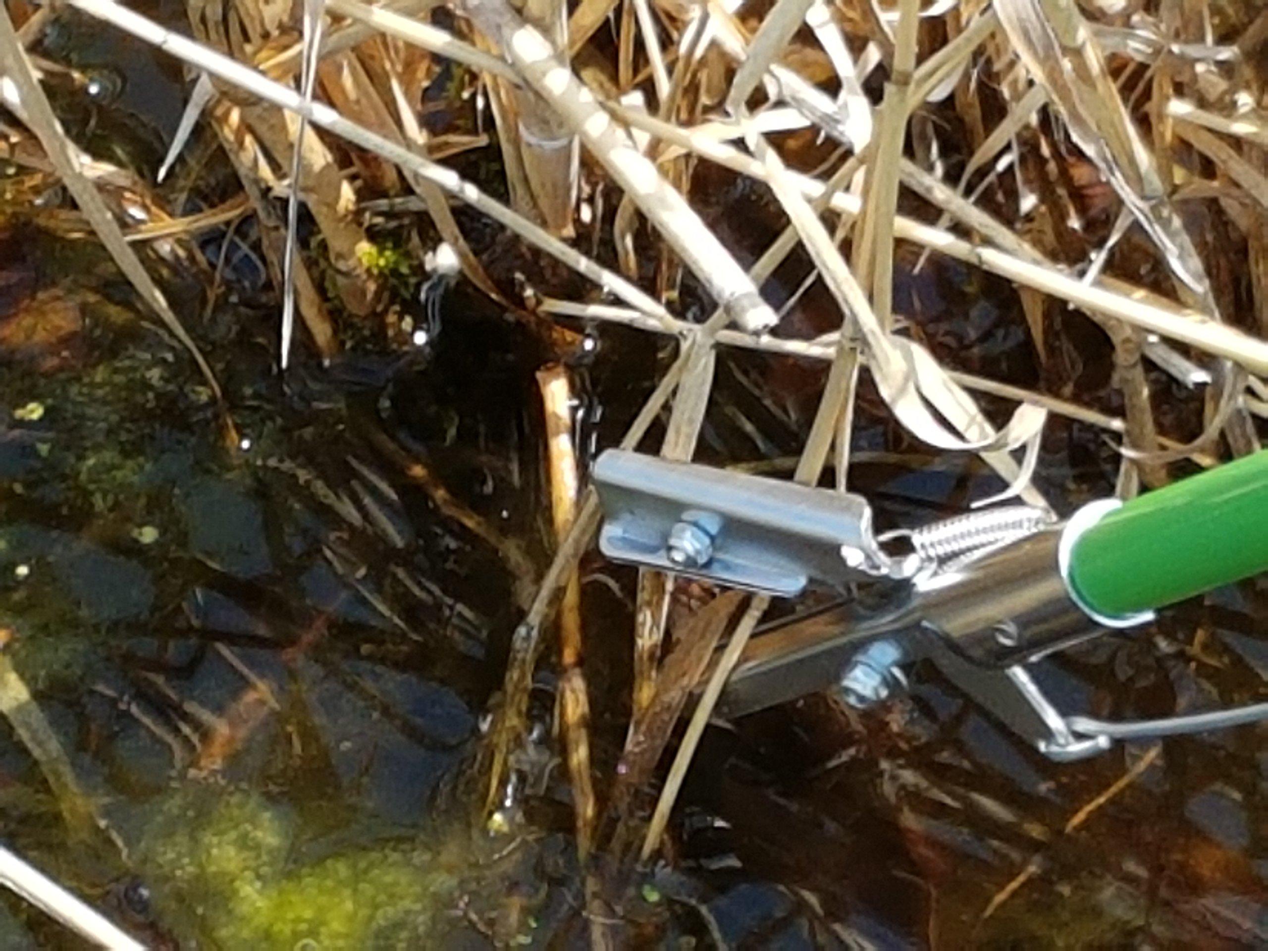 Pond Scissors