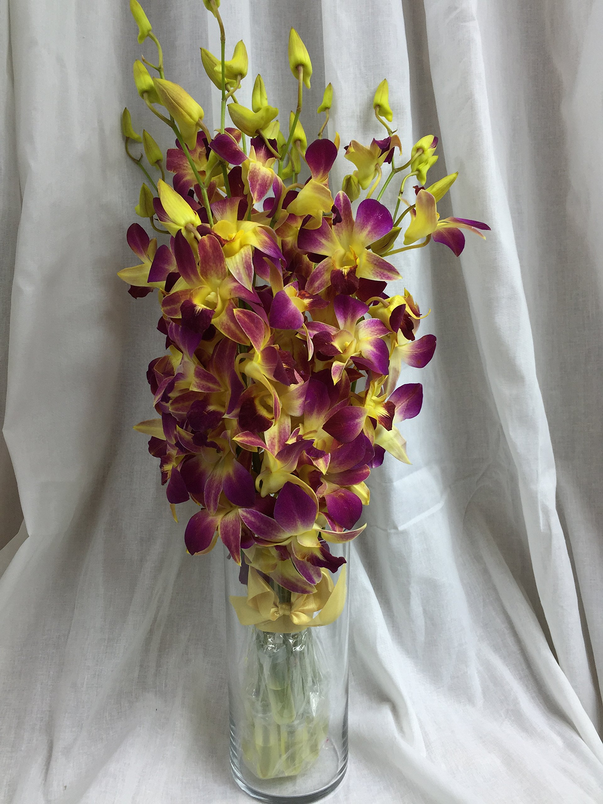 Orchid - Fresh Cut Flowers - Ten Stems of Dendrobium Sonia Tinted Yellow (Free Vase) by eflowerwholesale