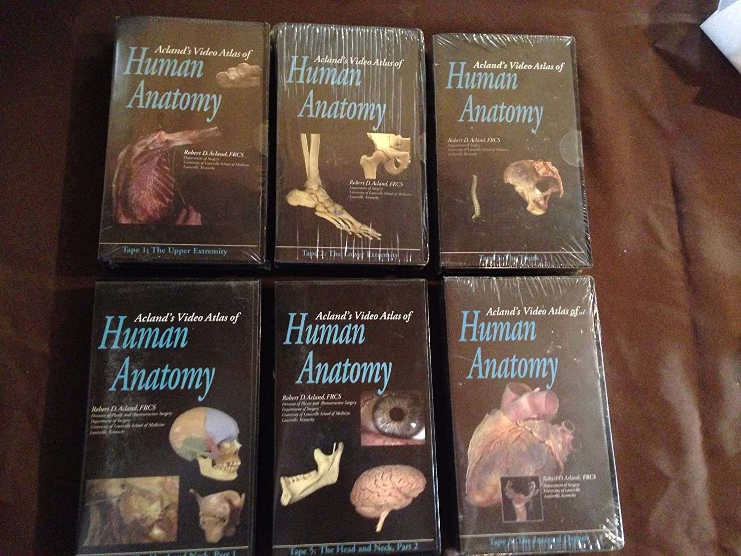 Amazon.com: Acland\'s Video Atlas of Human Anatomy Set of Four Videos ...