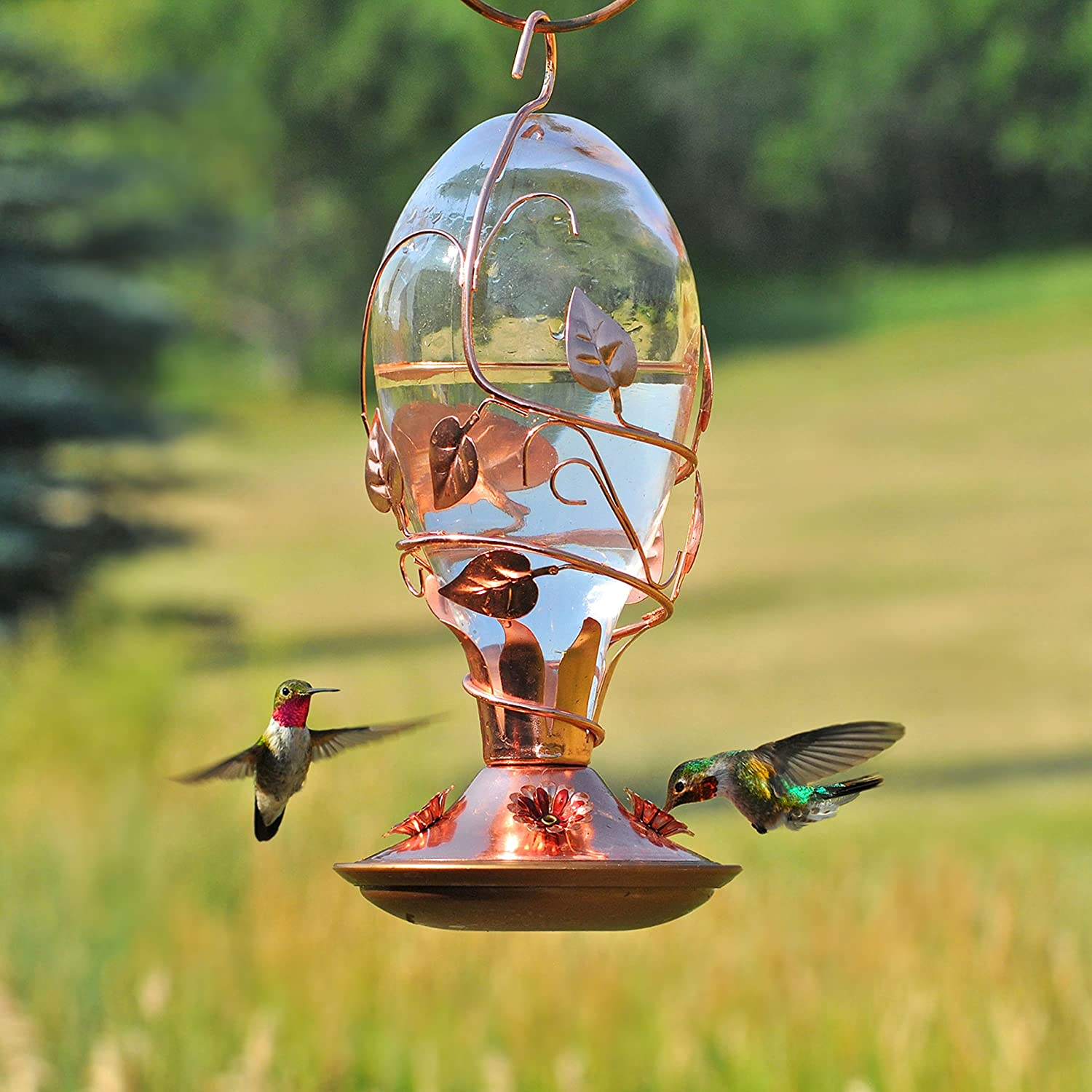 birdscapes feeder petal hummingbird rose outdoor hanging bird com dp ounce deluxe glass pet garden amazon feeders