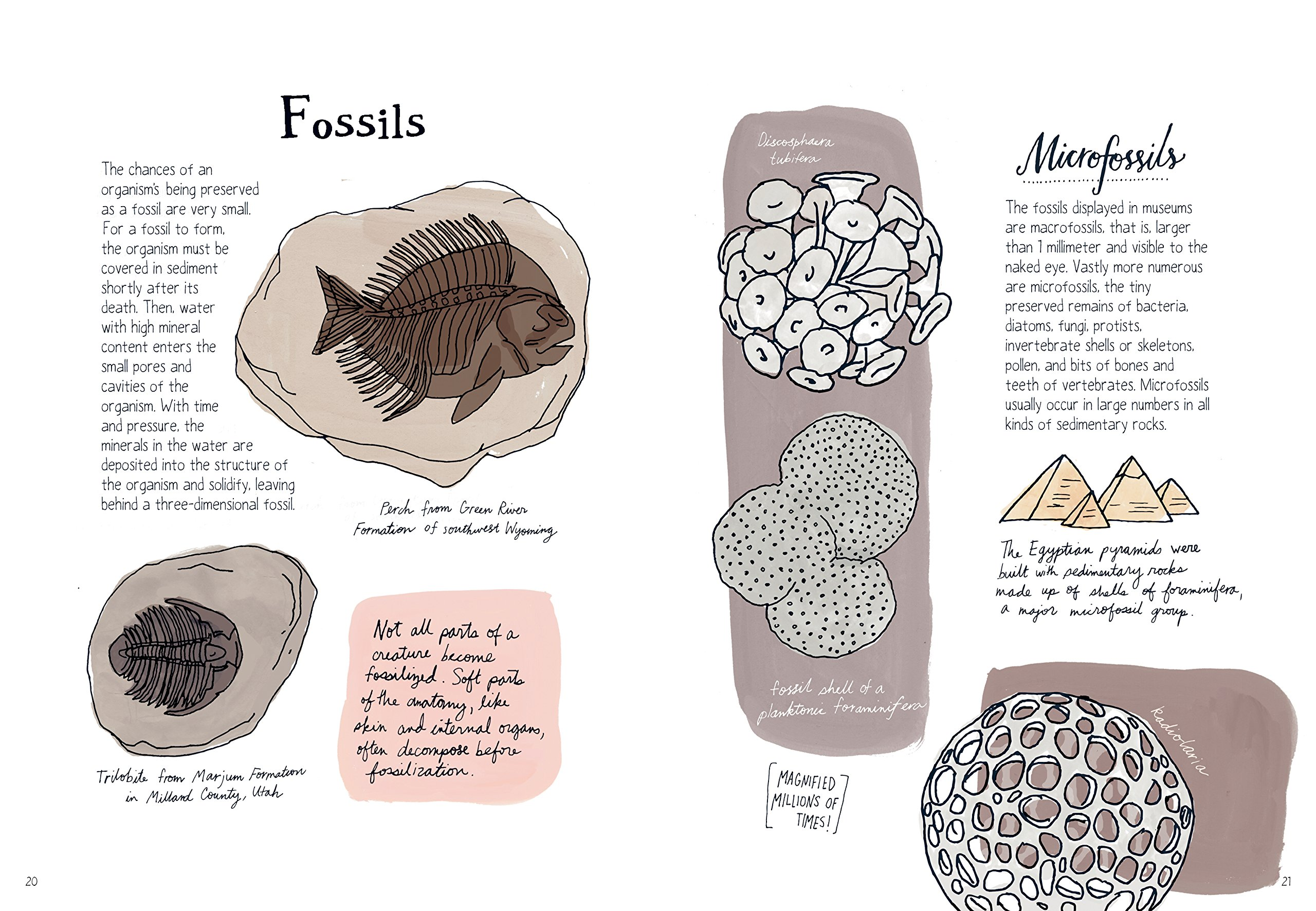Nature Anatomy: The Curious Parts and Pieces of the Natural World ...