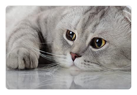 Amazon.com: lunarable gato mascota alfombrilla para comida y ...