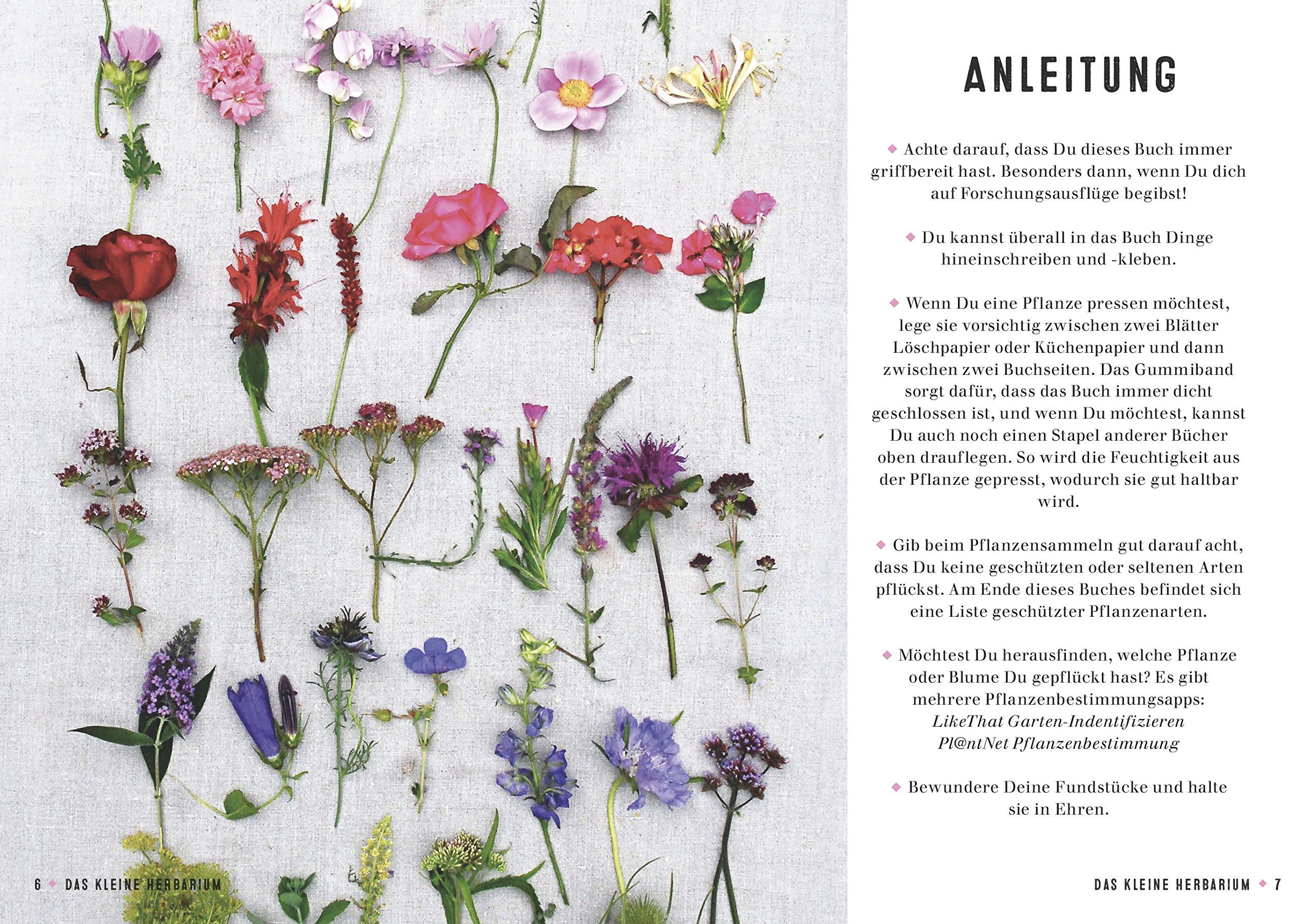 Herbarium Blätter das kleine herbarium ein buch zum sammeln erinnern und bewahren