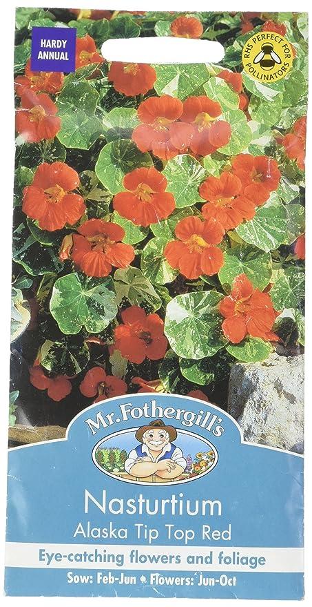 Mr Fothergill S 15250 Sachet De 25 Graines De Capucine Alaska Tip