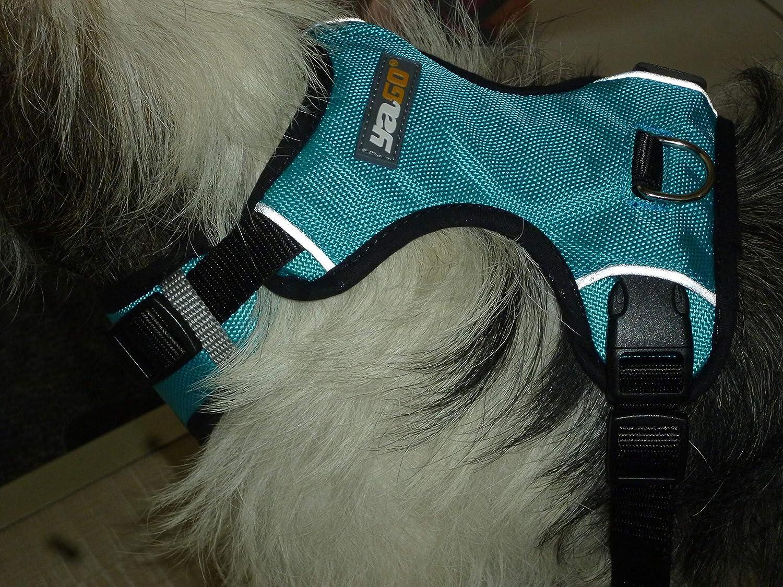 Yago 819076 Sport arnés para Perro: Amazon.es: Productos para mascotas