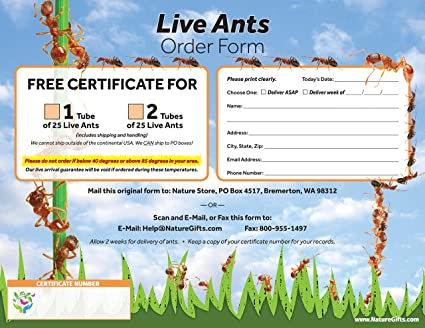 Amazon com: Coupon to Redeem for 2 Tubes of Live Ant Farm