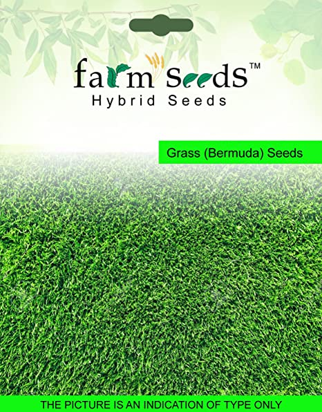 Farm Seeds Grass (Bermuda) 500 Grm Seed