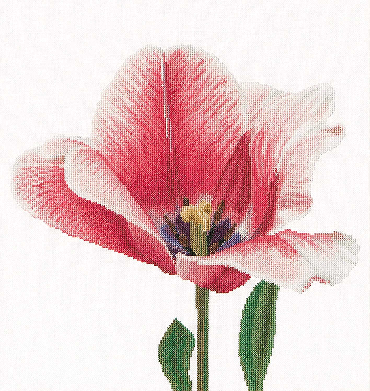 Pink Darwin hybrid tulip Stickpackung//gez/ählter Kreuzstich Thea Gouverneur