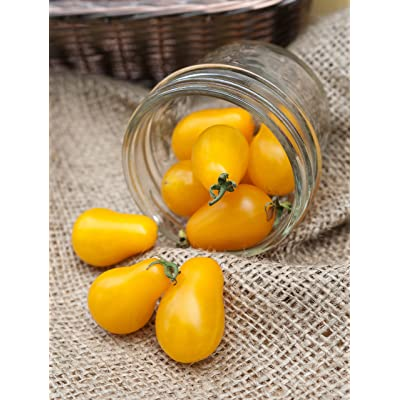 Ildi Yellow Pear Heirloom Tomato Premium Seed Packet + More : Vegetable Plants : Garden & Outdoor