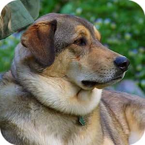 Amazon.com: Adorable & Cute Animals!!! Tons of Cute Animal