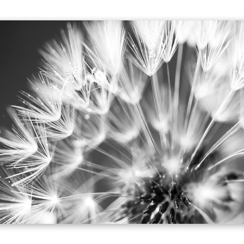 Murando - Fototapete 400x280 cm - Vlies Tapete - Moderne Wanddeko - Design Tapete - Wandtapete - Wand Dekoration - Blumen Pusteblume b-B-0087-a-d