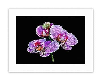 G Echinacea Flower Macro Art Print Home Decor Wall Art Poster