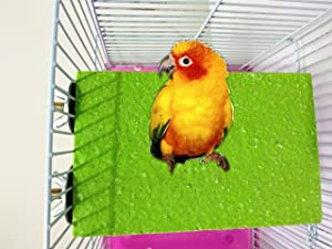 Hypeety Colorful Bird Perch Cage Stand Platform for Parrot Macaw African Greys Budgies Parakeet Cockatiels Natural Wood Board Safe Paw Grinding Clean Cage Toy (Random Color)