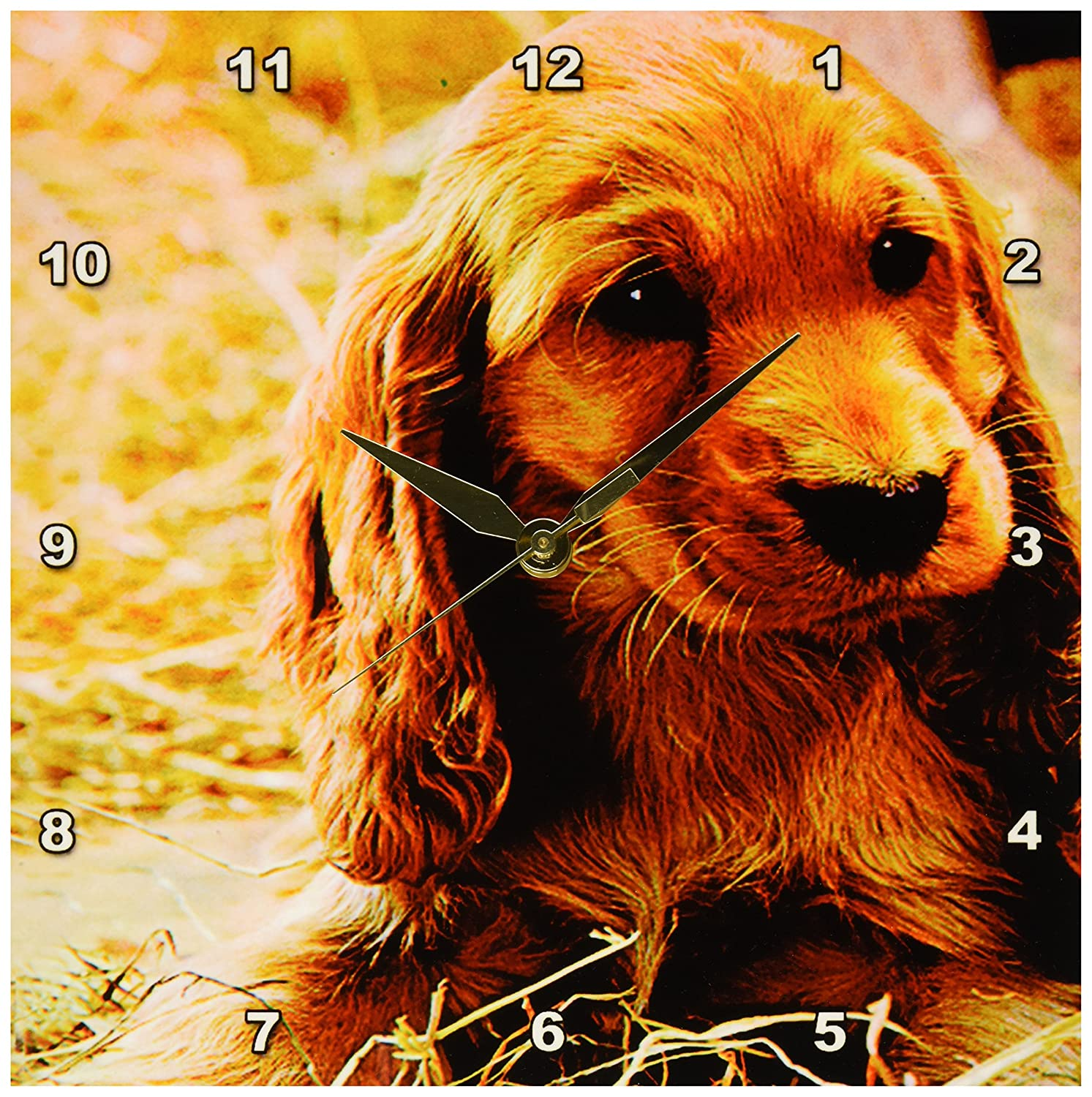 3dRose LLC Irish Setter Puppy Wall Clock, 10 by 10-Inch