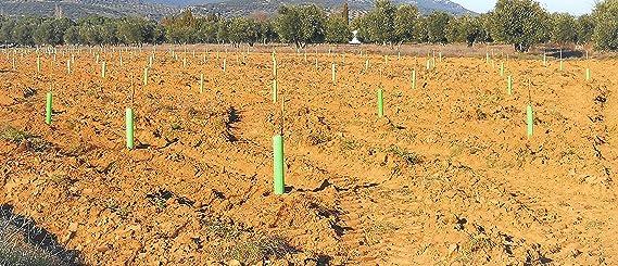 TODOCULTIVO Protector Árbol Perforado y Biselado de 60 cm. de ...