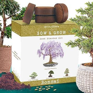 Amazon Com Nature S Blossom Bonsai Tree Kit Grow 4 Types Of