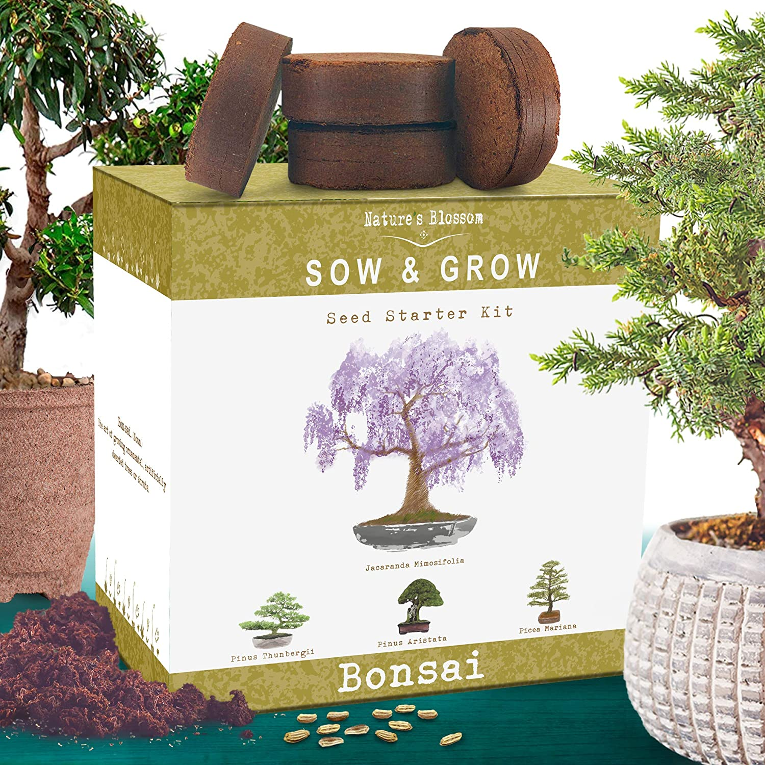 Nature's Blossom Bonsai Tree Kit  Grow 4 Types of Miniature Trees From  Seed  A Complete Indoor Gardening Seed Starter Set with Organic Tree Seeds,