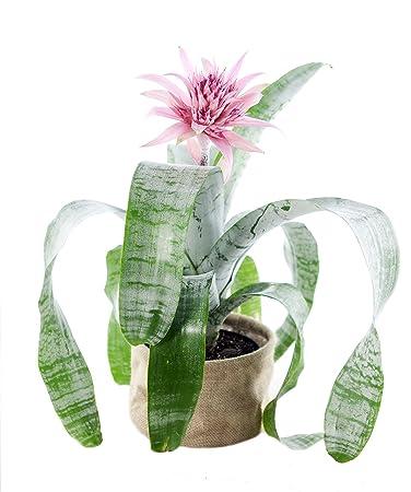 Amazon Tropical Silver Vase Plant Burlap Pot Cover Grocery