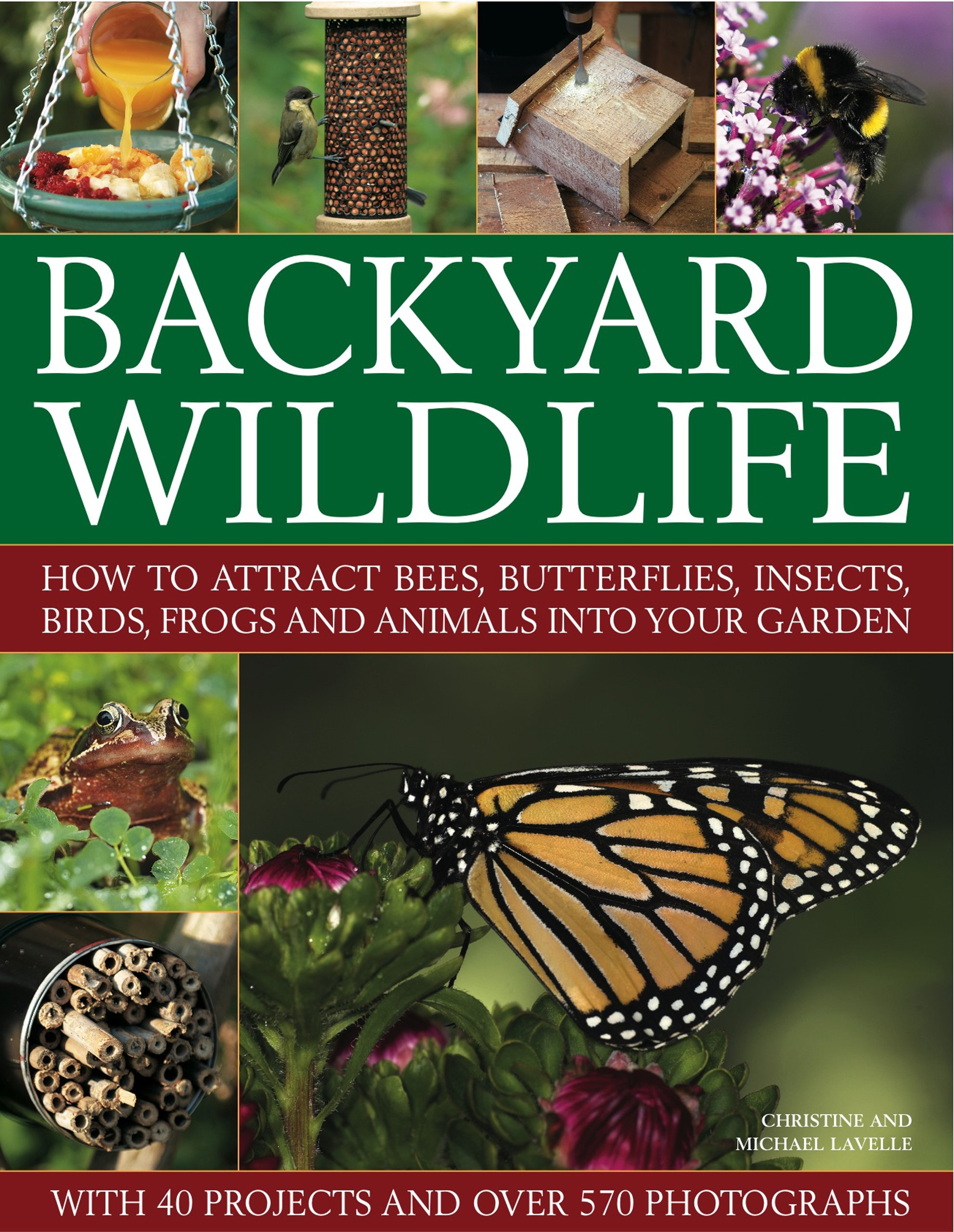backyard wildlife how to attract bees butterflies insects