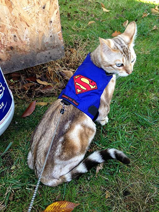 mynwood Cat chaqueta/arnés Superman gato hasta 8 mes – Escape prueba