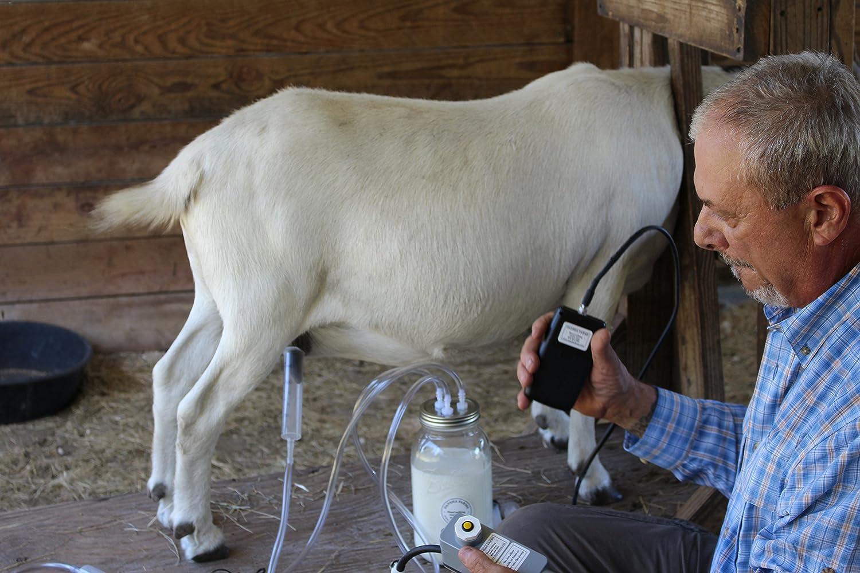 Single Vacuum Line suitable for sheep//goat milking machines