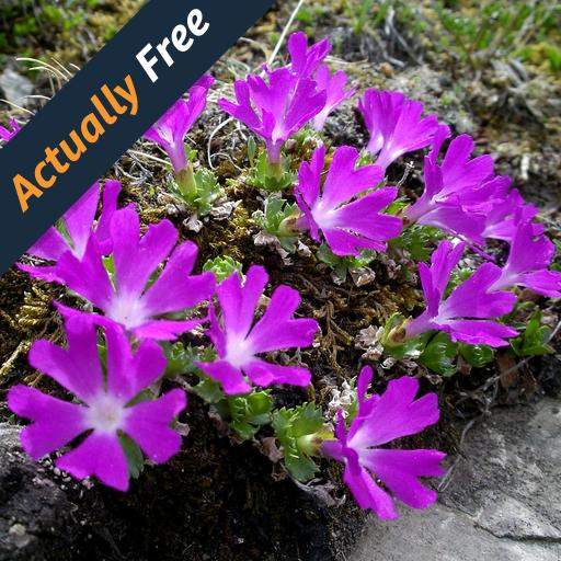 Wild Flowers of the Alps - Race Wildflower