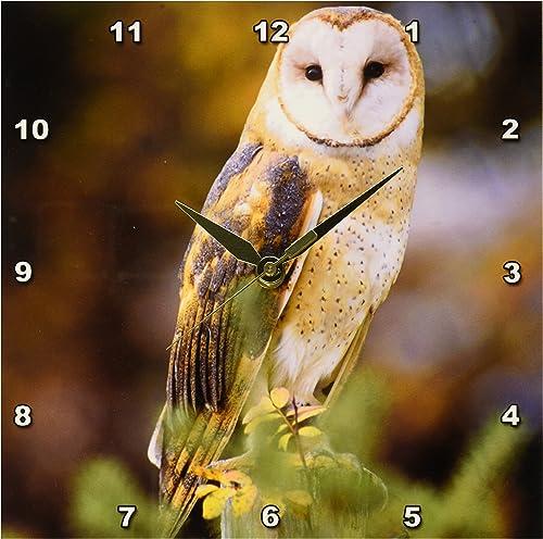 3dRose DPP_84070_1 Barn Owl on a Fence Post NA02 JAL0000 John Alves Wall Clock, 10 by 10-Inch