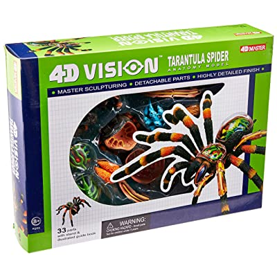 4D: Tarantula Spider Anatomy Model: Toys & Games