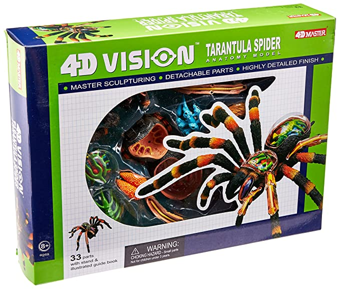Amazon.com: 4D: Tarantula Spider Anatomy Model: Toys & Games