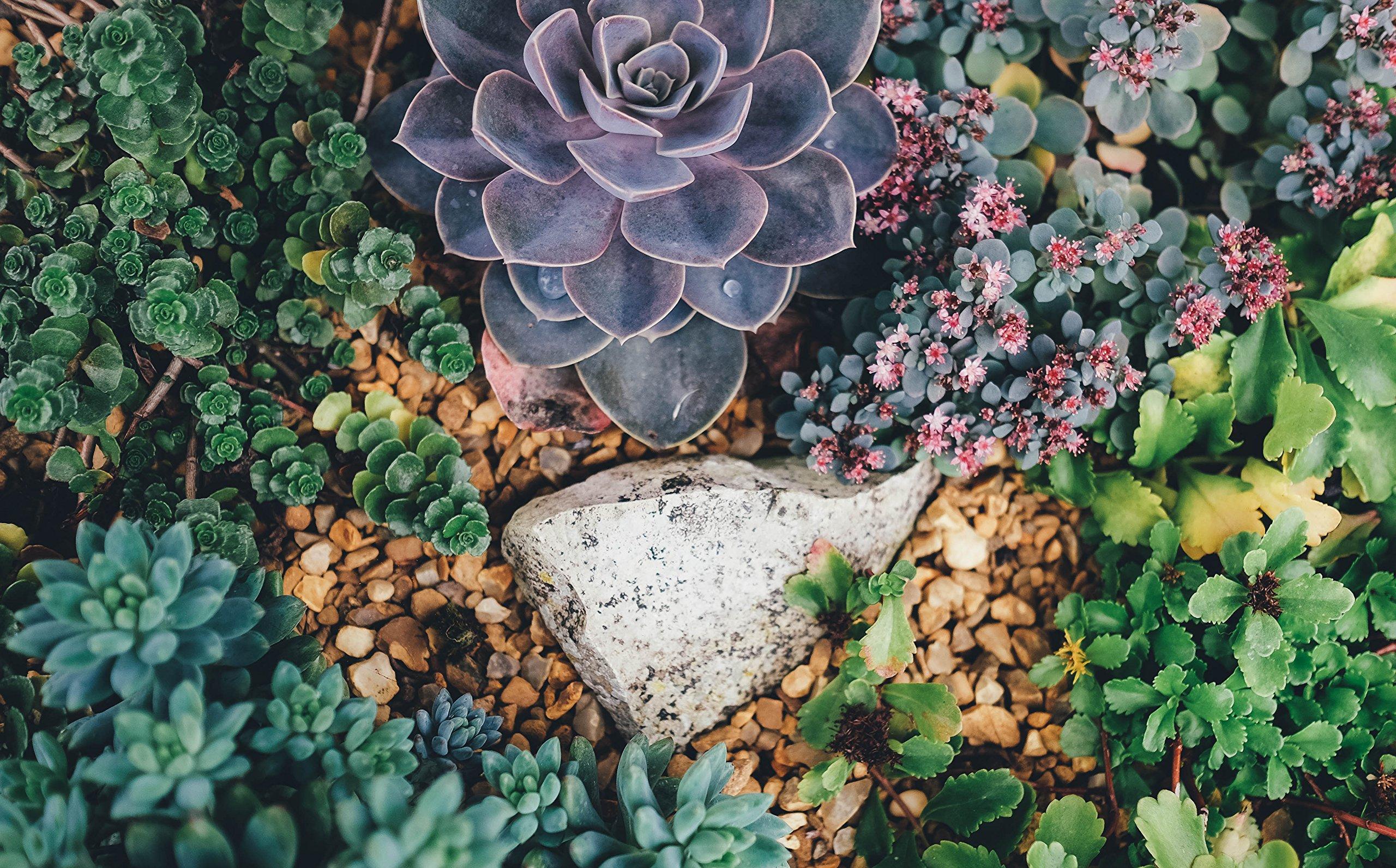 Succulent Plants by