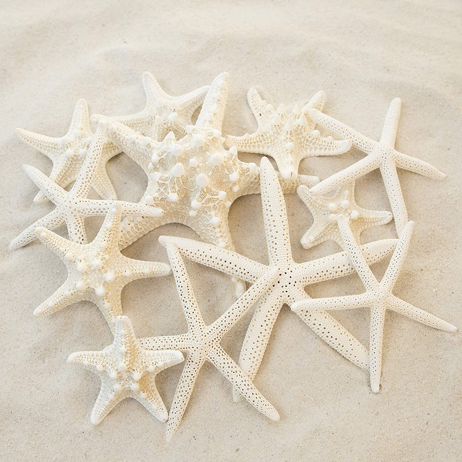 """Pencil and Knobby Starfish 1"""" to 6"""" Set of 12 - Wedding Centerpiece, Beach Home Decor, Crafts, Decorative Hanging Ornaments by Tumbler Home"""
