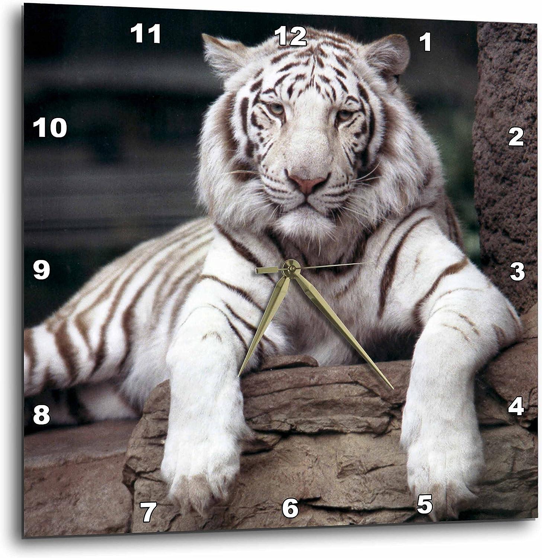 3dRose カリフォルニア州サクラメント動物園のホワイトタイガー - Us05 Tau0014 - Tananarive Aubert - 壁掛け時計、13×13インチ (DPP_88641_2)